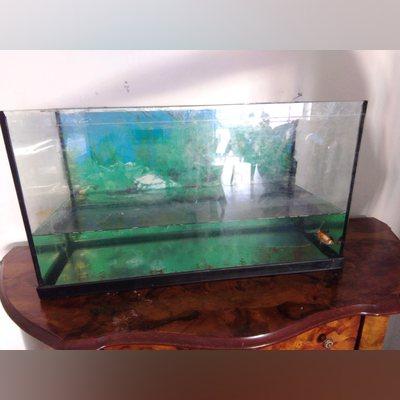 Aquario grande foto 1