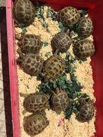 Tartarugas Terrestres foto 1