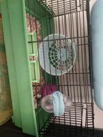 Gaiola de hamster com rodinha casinha bebedouro... foto 1