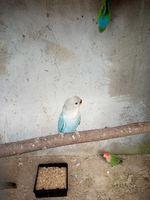 Aves foto 1
