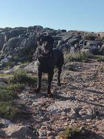 Um Labrador de um ano de idade foto 1