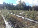 Alugo terreno agrícola foto 1