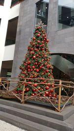 Árvore de Natal grande para montar foto 1