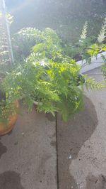 Plantas foto 1