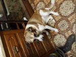 Dou esta cadela para a adoção foto 1