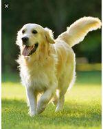 Passear cão foto 1