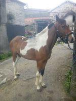 Cavalos foto 1
