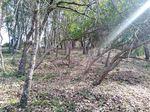 Limpeza e manutenção de terrenos agrícolas e florestais foto 1