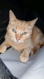 Doação gatinha de 5 mês ❤ foto 1