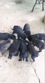 Dou 10 cães bebês 5 machos e 5 fêmeas foto 1