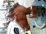 Um busto de cavalo em ferro foto 1