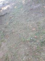 Faço limpeza de terrenos foto 1