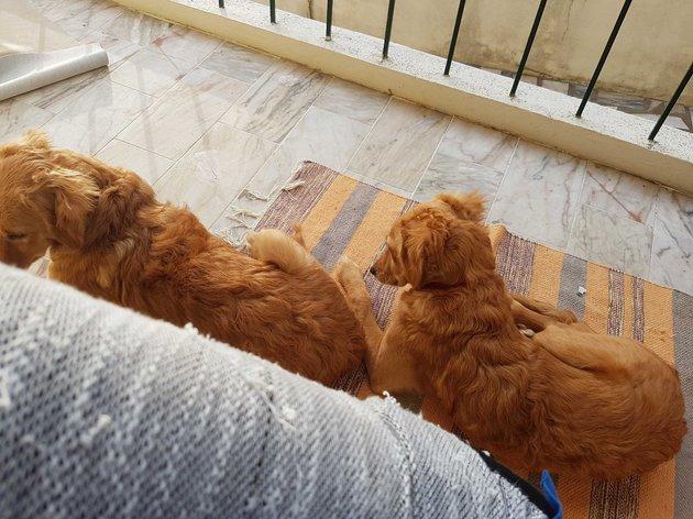 Adoção de 2 cadelinhas foto 1