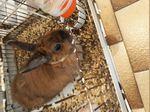 Coelha de estimação foto 1