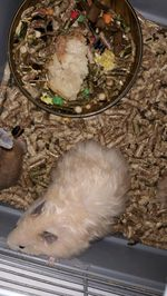 Vendo hamster foto 1