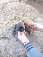 4 Cachorrinhos (fêmeas)