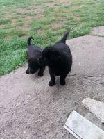 Dou dois cães de porte médio , com mês e meio.. foto 1