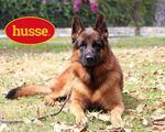 Ração para cães Gama premium profissional foto 1