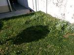 Faço serviços de jardinagem foto 1