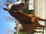 Venda de cavalos foto 1