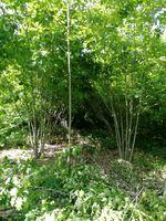 Limpeza de floresta terrenos etc foto 1