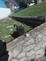 Cão foto 1