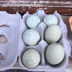 Ovos de raça Deutsches Buschhuhn, 6 ovos foto 1