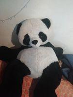 É um panda. foto 1