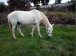 Cavalo foto 1