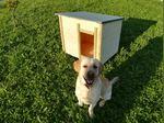 Casota cão madeira foto 1
