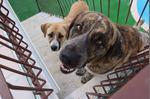 doação de cachorros foto 1